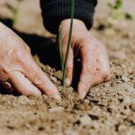 Planting plant